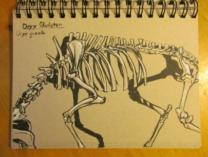Oryx Skeleton