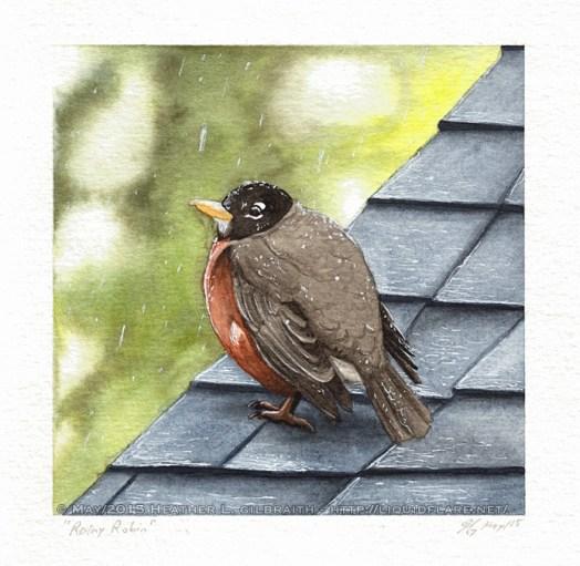Rainy Robin