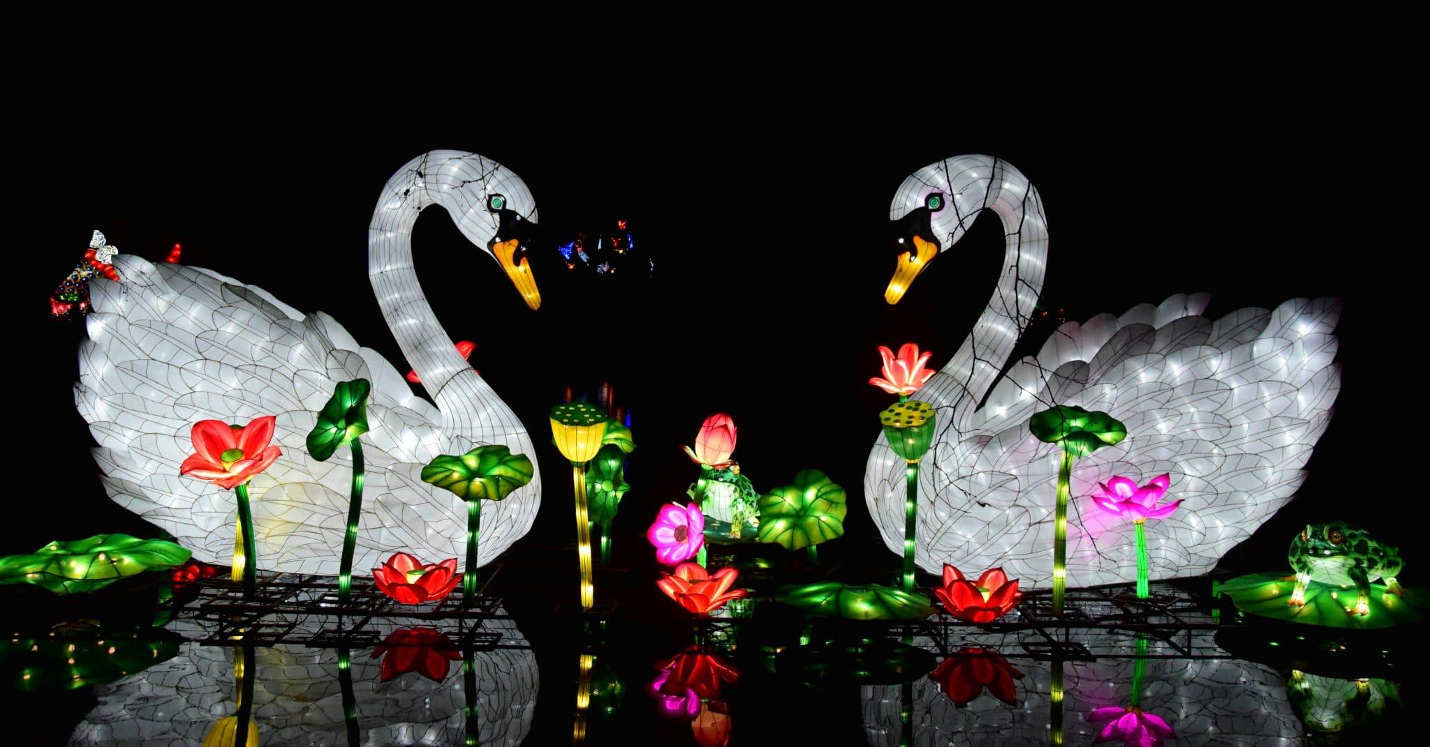 Rheinerlei beim China Light Festival