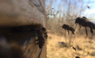 Bienen_2021-03-07_2