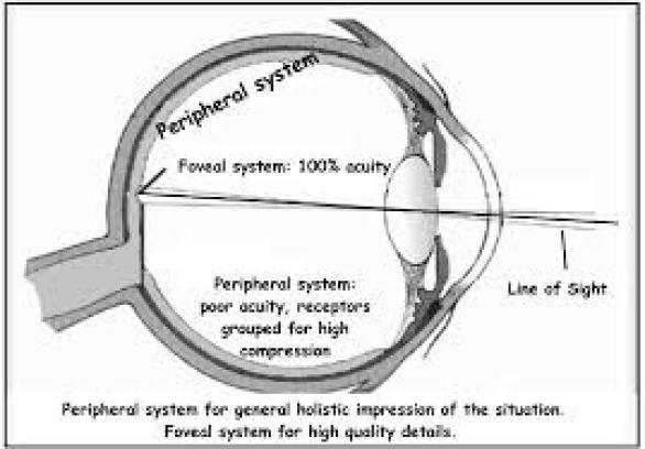 eyebalperiphery