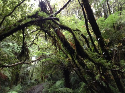 A lot of the walks were like this - quite dim and undercover (useful in the rain) with ferns everywhere
