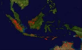 Fires in sumara (deforestation,my poor)