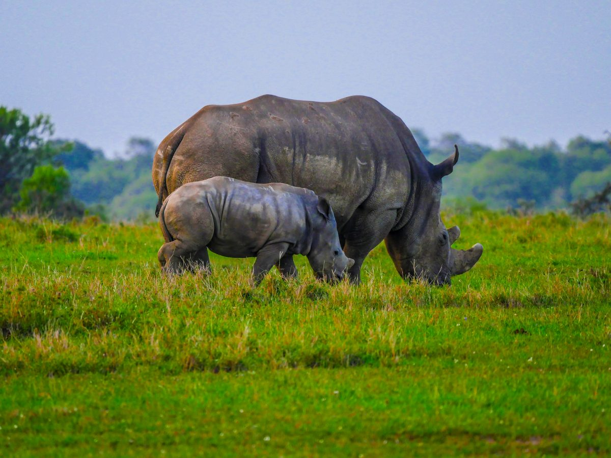 Rhino SOS