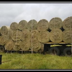 Teff Hay