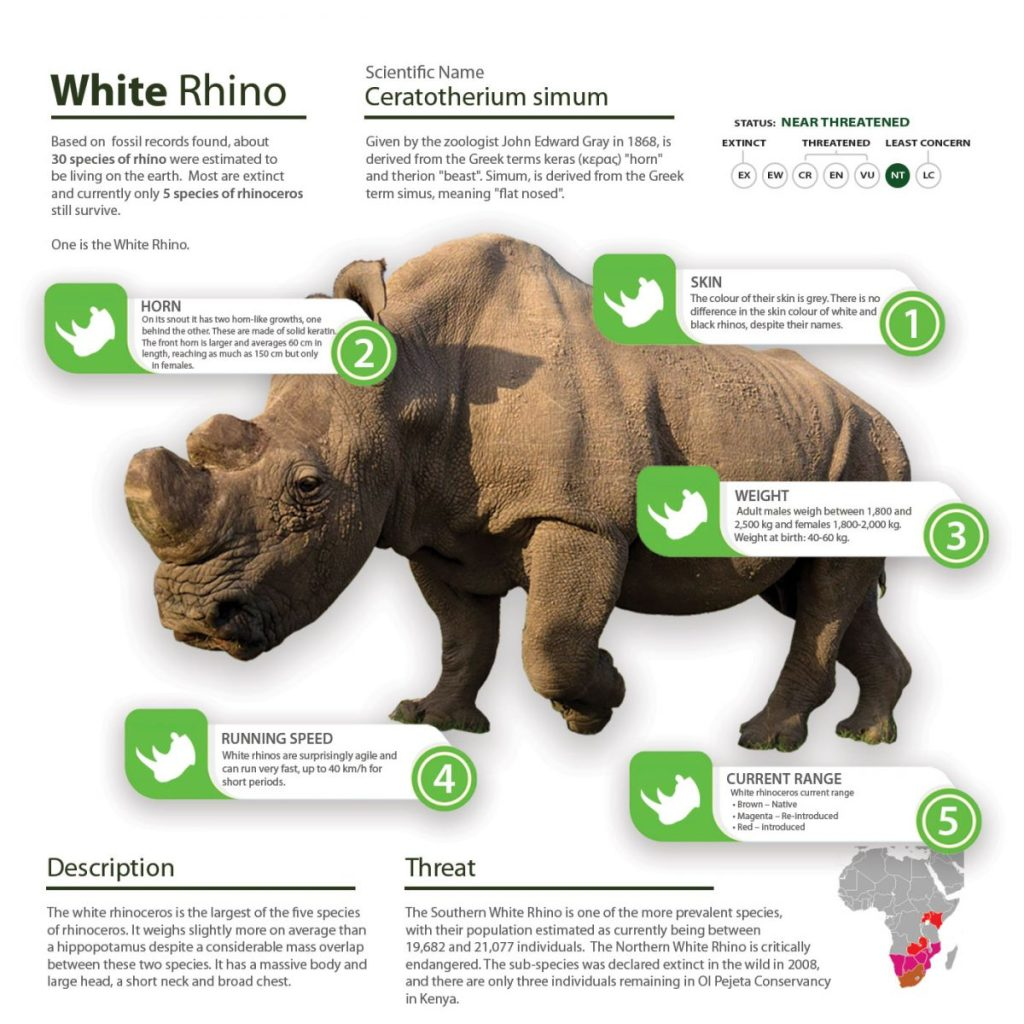 White Rhino, Save the Rhino