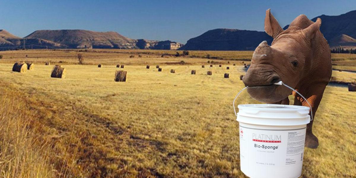 Rhino Grocery Market - Rhino SOS