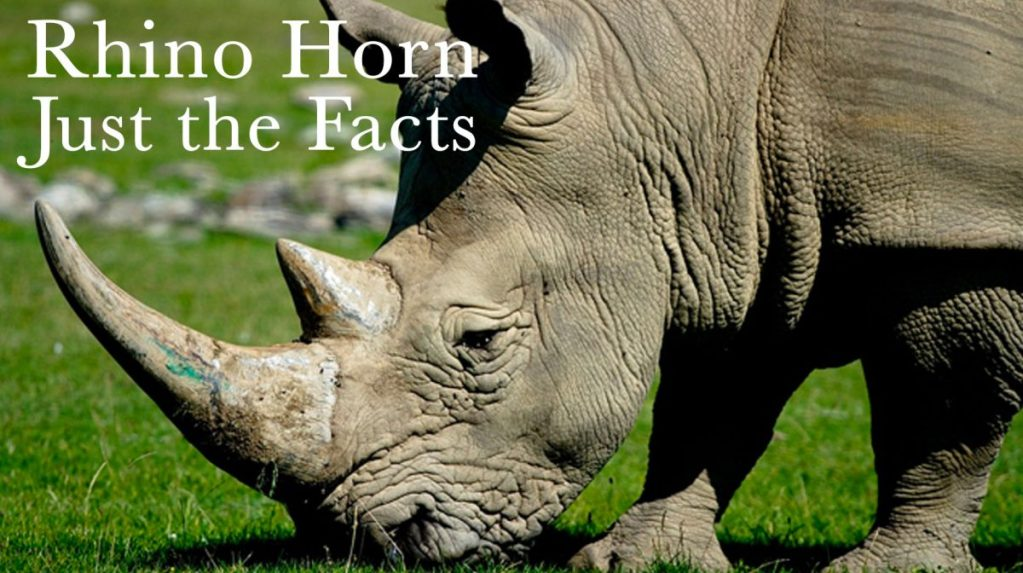 Myths about rhino horn