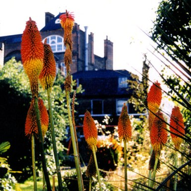 Bonnington-garden2