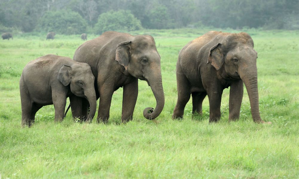 Elephant DNA: The Secret to Cancer Suppression?