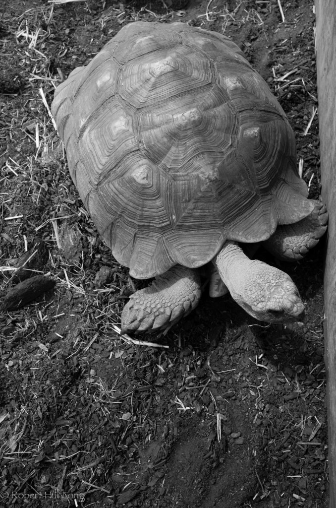 Unhappy tortoise