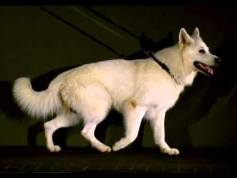 Bewegungsablauf & Gangwerk des Hundes