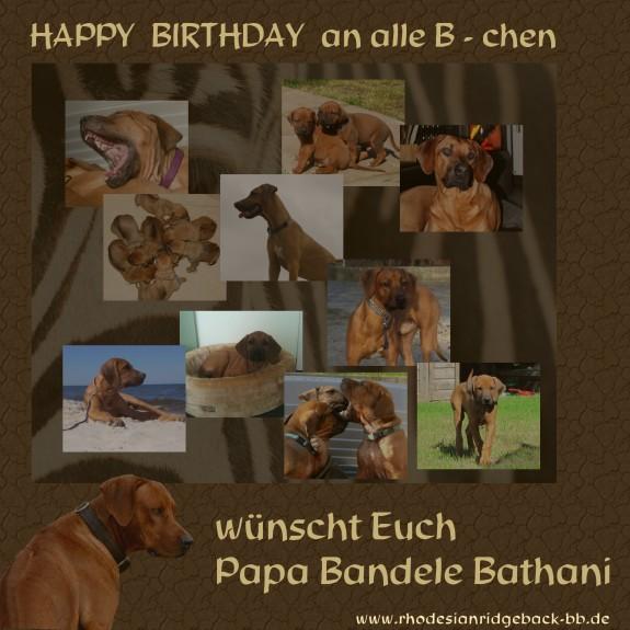 Geburtstag B-chen Welpen / Nachzucht Bandele Bathani / Kennel tussanganaMbey Rhodesian Ridgeback