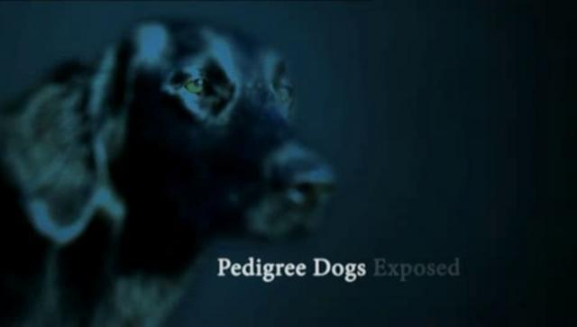 pedigree-dogs-exposed