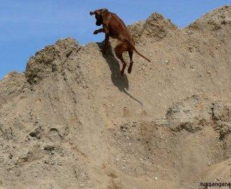 Rhodesian Ridgeback, Spass in der Sandkuhle