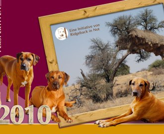Der Ridgeback in Not Kalender 2010