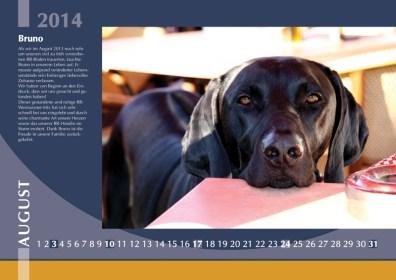 Der Ridgeback in Not Kalender 2014