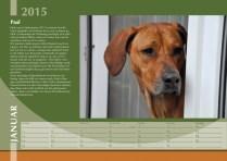 Der Ridgeback in Not Kalender 2015