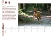 Der Ridgeback in Not Kalender 2016