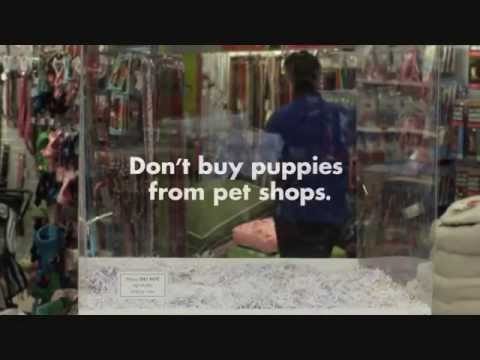 Don't buy puppies from pet shops!