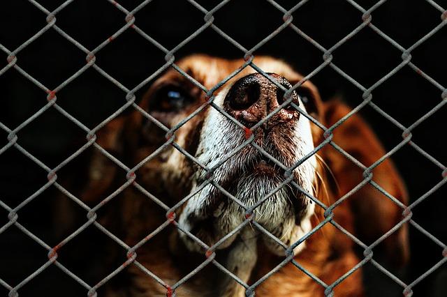 Bußgeldkatalog - Tierquälerei