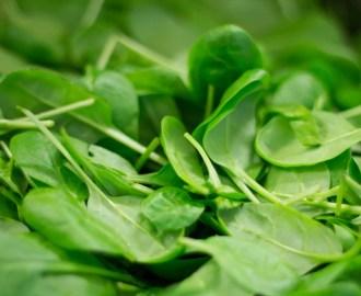 Junger Spinat für den Hund, BARF, Gemüse, Pic, Bild