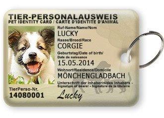 TierPerso: Schütze jetzt deinen Liebling mit der süßesten & informativsten Hundemarke