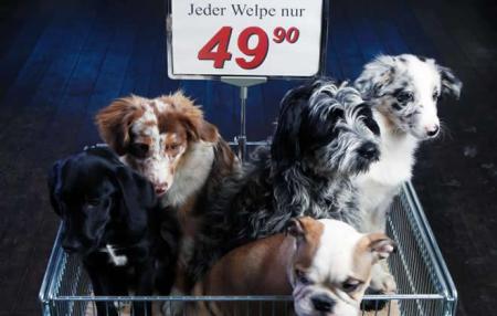 """Europaweit aktiv für Tier- und Naturschutz """"Wühltischwelpen – nein Danke!"""" Aktion gegen den Welpenhandel"""