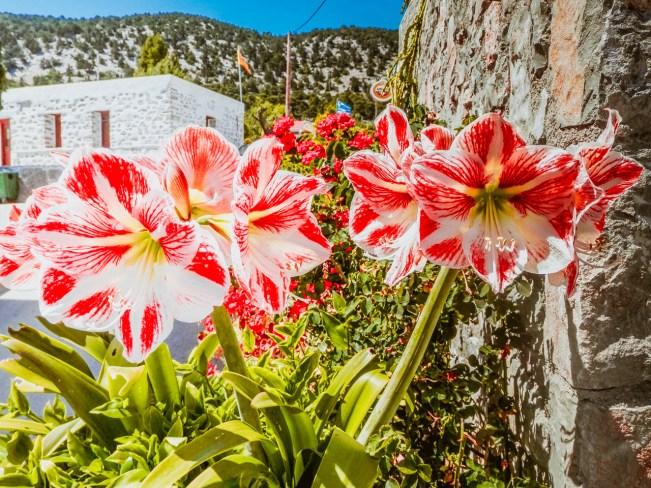 Flower in Monolithos