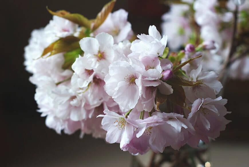 Frühling, Foto: Gemma Evans