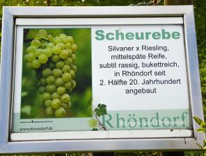 Informationstafel: Scheurebe