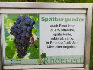 Informationstafel: Spätburgunder