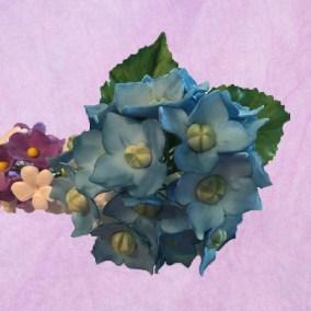 Sugar Flowers - Hydrangeas