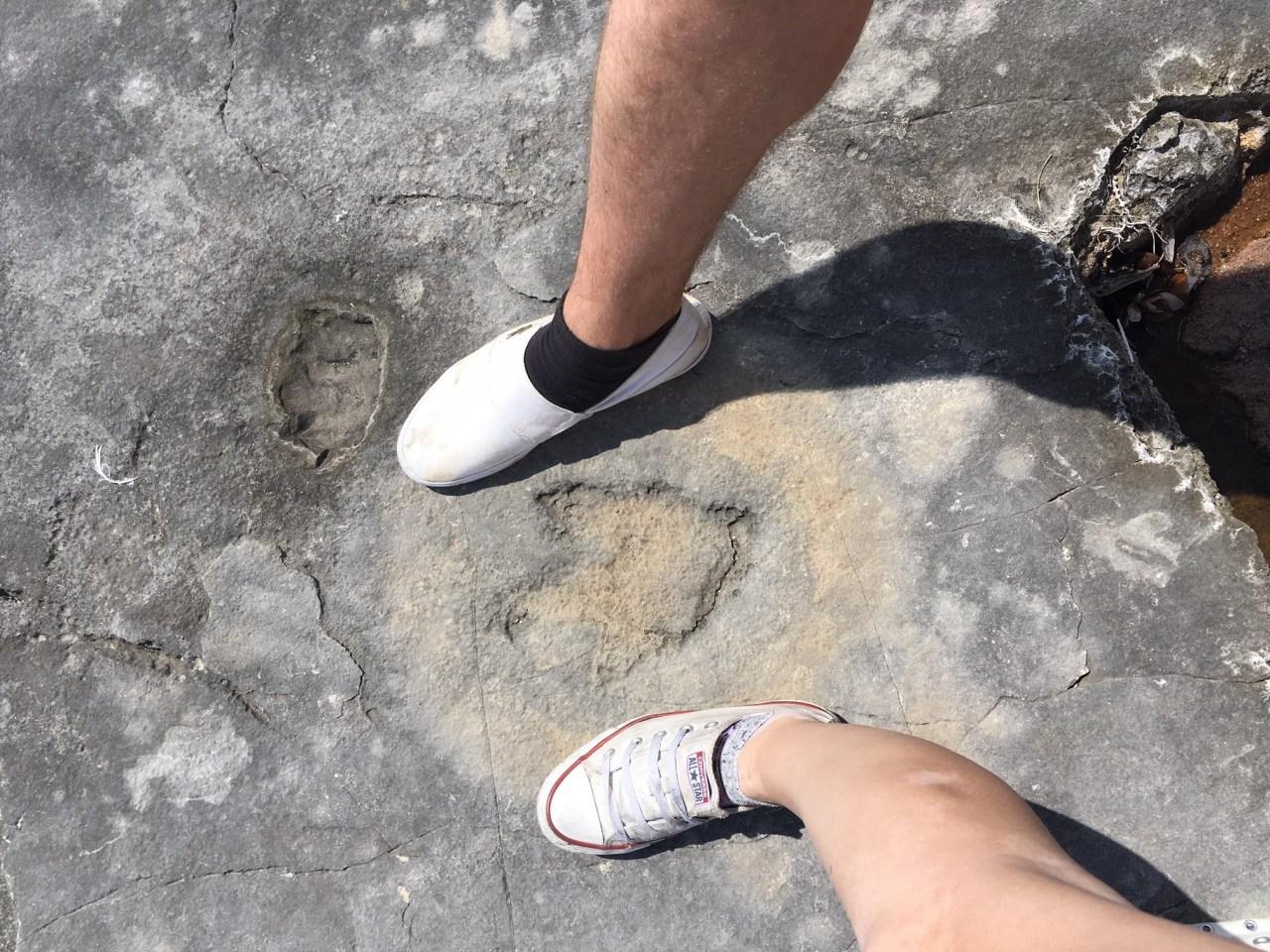 Dinosaur fossil Brijuni Croatia