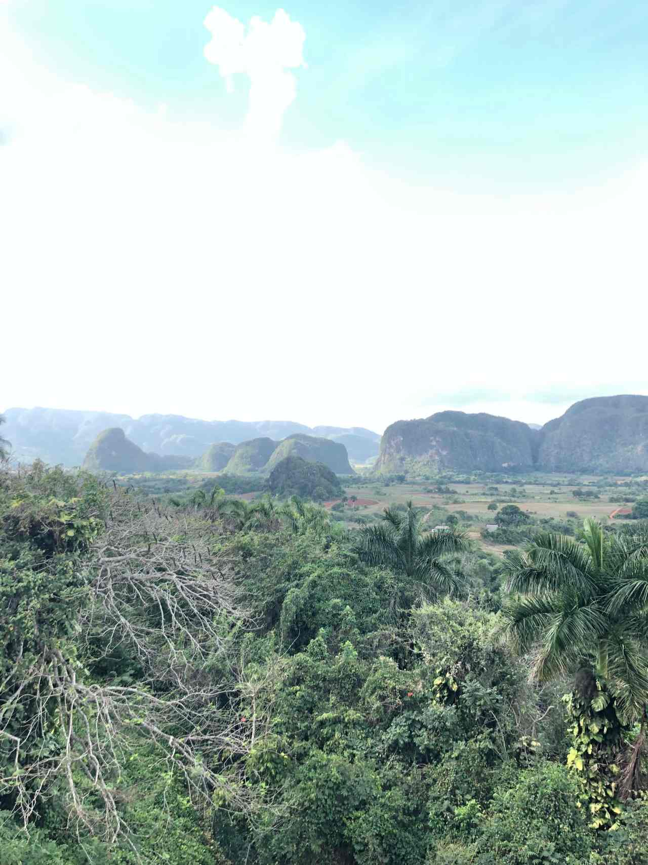 Vinales Tobacco Fields
