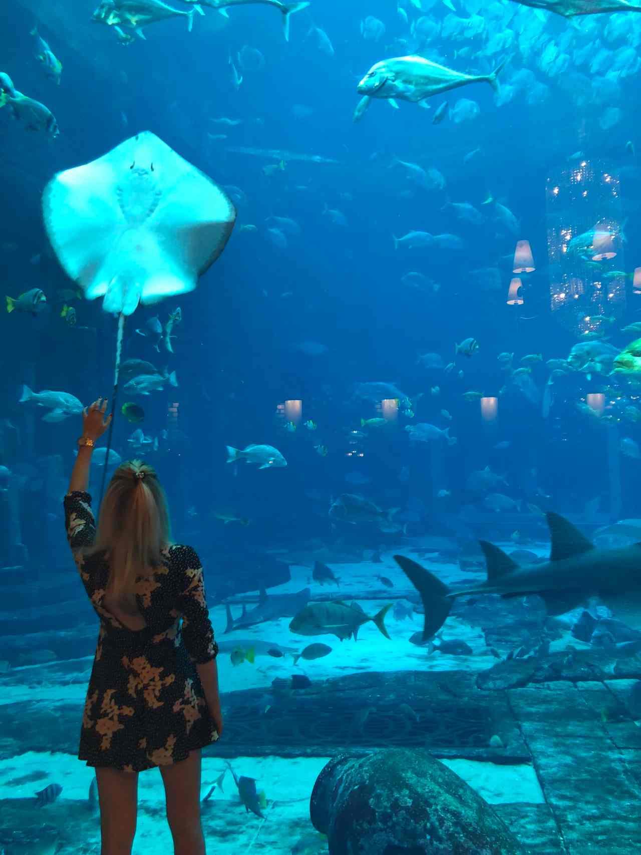 ossiano shark sting ray dubai