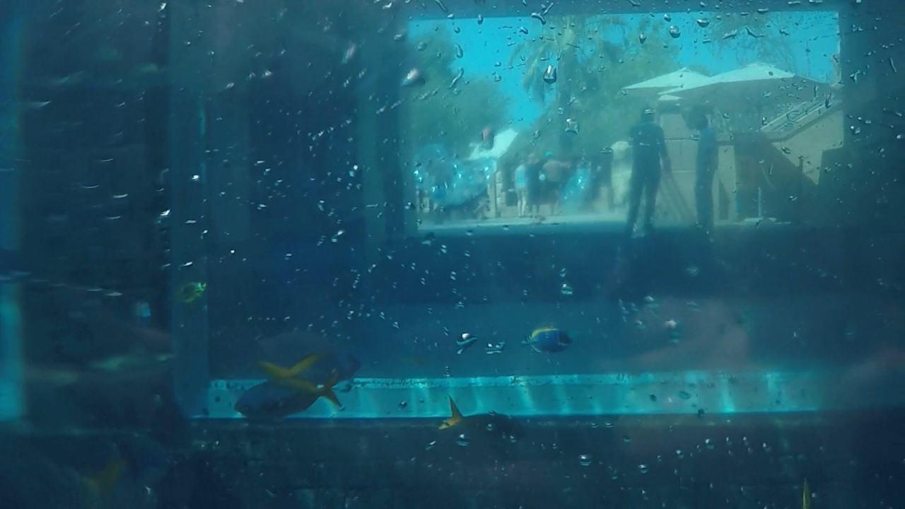 Aquaventure waterpark Atlantis Dubai shark attack