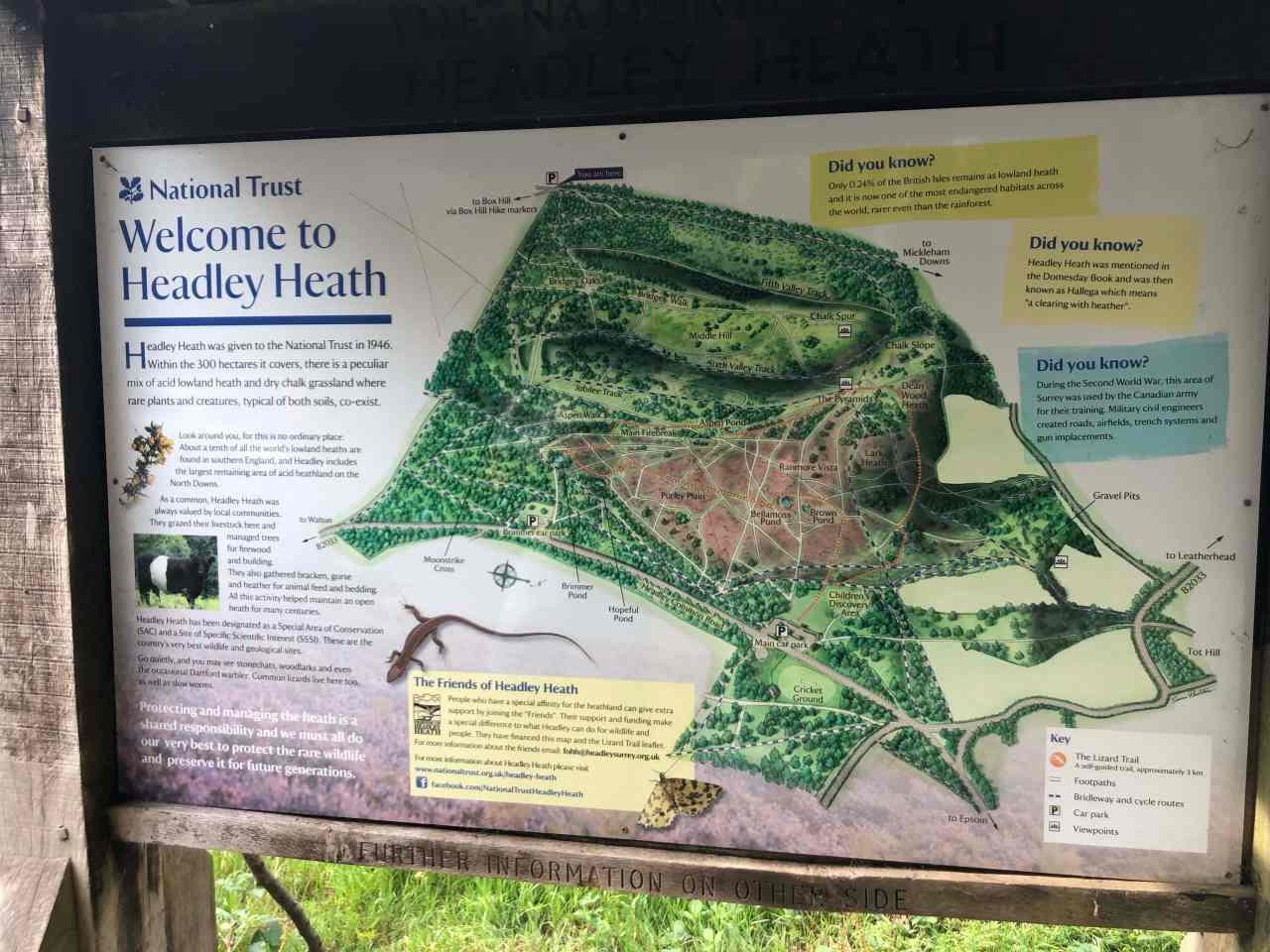 Headley heath