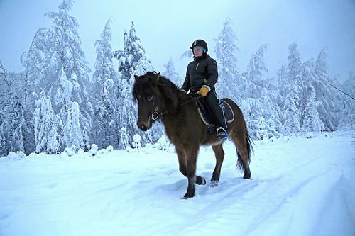 horse in snow photo