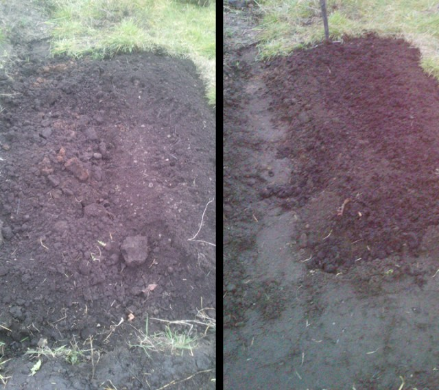 Before and after of a bed and path, side by side.