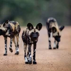 rhulani safaris img under pic 4