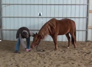 carrot stretch with horse