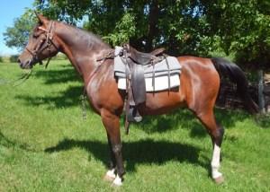 saddle_blanket_endur