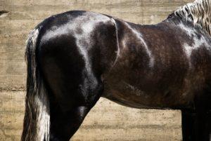 a shiny horse
