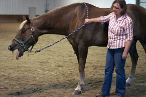 horse massage masterson method