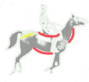 horse stifle problem