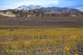 death_valley_002w