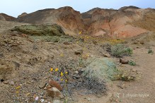 death_valley_0059w