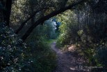 Upper Solstice Canyon