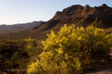 Saguaro National Park, AZ